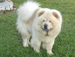 कुत्ता विदेशी   .............: रिवेश प्रताप सिंह